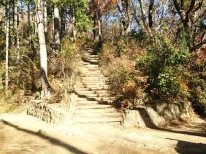 No. 5th trail